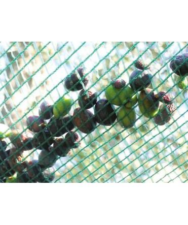 Filet de récolte Olive et fruits TIS. PGLT